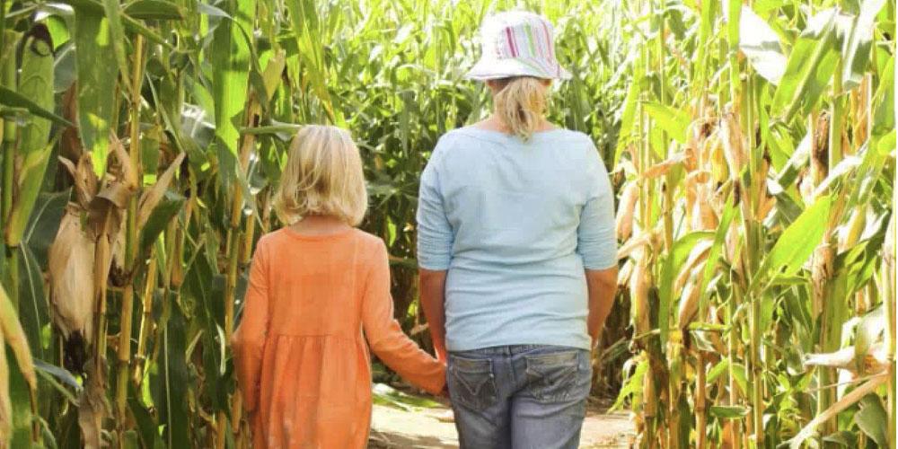 Corn Maze at Access Pass attraction Conner Prairie