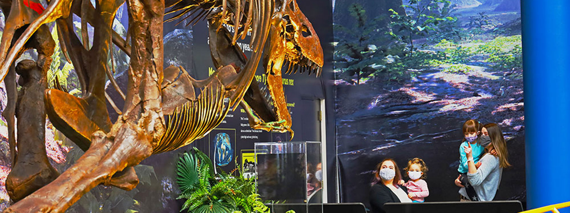 See Bucky the teenage T. rex in the SUE Meets Bucky exhibit at The Children's Museum of Indianapolis.