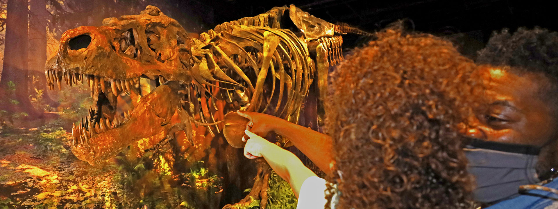 See SUE the T. rex in the SUE Meets Bucky exhibit at The Children's Museum of Indianapolis